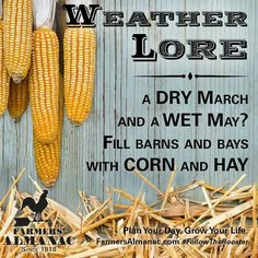 Weather Lore Old Wives Tale, Wives Tales, Weather Predictions, Weather Forecast, Weather Quotes, Nature Secret, Old Farmers Almanac, Native American Wisdom, Wise Quotes