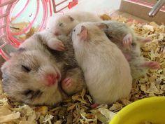Hamster babies!! So cute