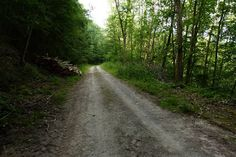 Waldweg im Kammerforst