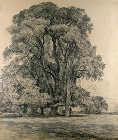 John Constable, 1776-1837, British, Elm Trees In Old Hall Park, East Bergholt, 1817. Pencil, with traces of grey wash and white heightening, 59.1 x 49.5 cm. Victoria and Albert Museum, London. Romanticism.