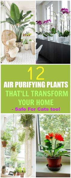 I am SO GLAD I found these plants! I have been having so much trouble finding air purifying plants that are safe my fur babies!