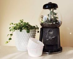 Repurposed Vintage Bubblegum Machine Terrarium  by FernandFostered