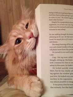"Cats Who Have No Intention Of Letting You Read Your Book ""Spoiler alert: the main character dies. Now gimme some tuna."""