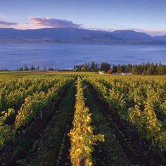 Views of Okanagan Lake from the vineyard at Cedar Creek Estate Winery in Kelowna.  Credit: Destination British Columbia