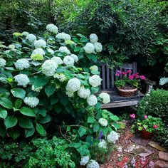"199 Likes, 40 Comments - Linda Vater  (@potagerblog) on Instagram: ""The lovely Annabelle #hydrangea threatens to take over and consume my garden bench. But who can…"""