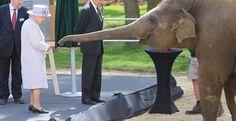 Η βασίλισσα Ελισάβετ τάισε μπανάνες έναν ελέφαντα σε ζωολογικό κήπο — ΣΚΑΪ (www.skai.gr)