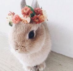 A beautiful flower wreath for a beautiful bunny - Süße tiere - Adorable Animals Animals And Pets, Funny Animals, Cute Baby Bunnies, Pictures Of Baby Bunnies, Cute Little Animals, Adorable Animals, Hamsters, Rodents, Cute Creatures