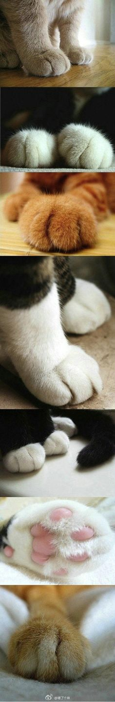 Cutest thing about cats!  Soft paws. My cats are used to me playing with their little paws. I love them.