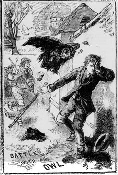 Illustrated Police News 3 June 1882: A son of a farmer of Marhamchurch has been admitted into Stratton Hospital suffering from severe injuries inflicted upon him by an owl. A pair of owls had made their home in an elm-tree, and made raids on the farmer's chickens to supply the wants of numerous young family. One of the farmer's sons ascended the tree and secured two of the young ones, and kept them for some days, feeding them by hand. He had one of them in his hands showing it to a friend…