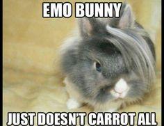 #emo #bunny