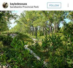 Sandbanks Provincial Park Ontario Parks, Organic Living, Wilderness, Hawaiian, Places To Visit, Plants, Album, Wood, Woodwind Instrument