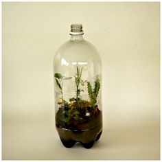 Earth Day Craft: Recycled Soda bottle terrarium