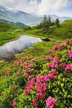 Berner Oberland / Scheidegg, Switzerland