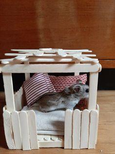 Diy Hamster House, Hamster Bin Cage, Hamster Life, Hamster Habitat, Hamster Toys, Hamster Stuff, Diy Toys For Hamsters, Best Hamster Cage, Syrian Hamster Cages