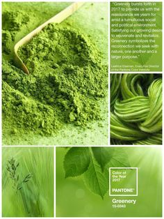 Pantone Color of the Year 2017 Greenery 2017 Pantone Color Of The Year, Greenery Pantone, Green Palette, Scenery Photography, Green Life, Color Stories, Shades Of Green, Color Inspiration, Collages