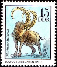 German Democratic Republic.  German Zoological Gardens.  SIBERIAN CHAMOIS. HALLE.  Scott 1632 A498, Issued 1975 Mar 25, Perf. 13 1/2 x 13, 15. /ldb. (MINT)