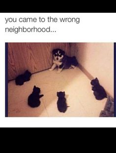 You came to the wrong neighborhood, Motherpupper!  - The revenge of the cats :) <3