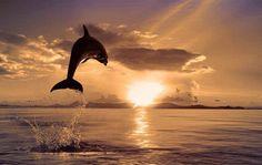 Dolphin at sunset, amazing