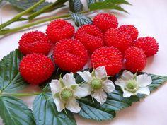 Daleys Fruit Tree: Raspberry Plant - Atherton Raspberry - Oh So Bright