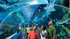 World's best zoos and aquariums - CNN.com