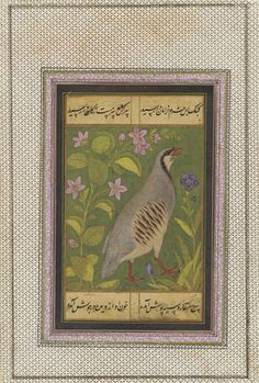 The chukar partridge appears continually in paintings from both Iran and India, being especially prominent during the sixteenth and early seventeenth centuries. | A chukar partridge | late 16th century | Mughal dynasty | Opaque watercolor and ink on cloth | India | Purchase-Smithsonian Unrestricted Trust Funds, Smithsonian Collections Acquisition Program, and Dr. Arthur M. Sackler | Arthur M. Sackler Gallery | S1986.413