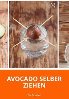 Für mehr Grün auf der Fensterbank erkläre ich heute, wie man Avocado selber ziehen kann.