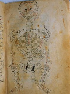 Author: Mansur ibn Ilyas (fl. ca. 1390).    Title: Tashrih-i badan-i insan. [Anatomy of the Human Body].
