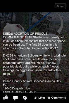 Please rescue spot from the PASCO COUNTY FLORIDA KILL SHELTER where up to 50 dogs will be killed to make room for more.