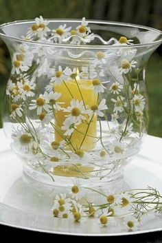 daisy-filled hurricane lamp with candle Candle Lanterns, Candle Jars, Candles, Glass Candle, Happy Flowers, Beautiful Flowers, Daisy Hill, Sunflowers And Daisies, Daisy Love
