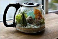Teraryum; genellikle cam ve plastik maddelerden imal edilen ve içinde sürüngenler, böcekler, bazı bitki türleri için kara ortamının taklit edildiği akvaryum benzeri tanklardır.