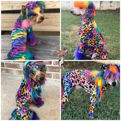 Dog Grooming, Yorkie, Scooby Doo, Dogs, Animals, Fictional Characters, Rainbow, Colorful, Design