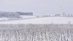 https://flic.kr/p/ZWGCRu | Snow Landscape November / Hó Táj November | Snow Landscape November Schneelandschaft Schnee Landschaft Hó Táj