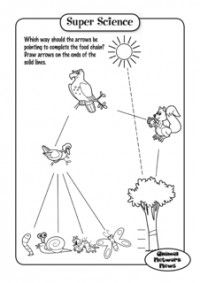 Food chain on Pinterest   Food Chains, Food Webs and Food ...