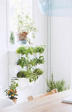 O prto de alumínio. O alecrim gigante. Planter Banter. 9 Reasons Why Living with Plants is Kind of the Best. | Paper and Stitch