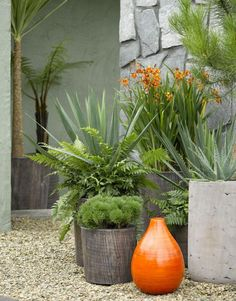 Front Garden Ideas - Potted Plants