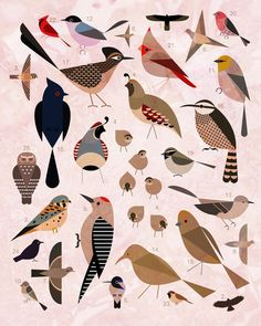 Birds of the Sonoran Desert Art Print - by Scott Partridge - lovely simple designs to use in felt/fabric.