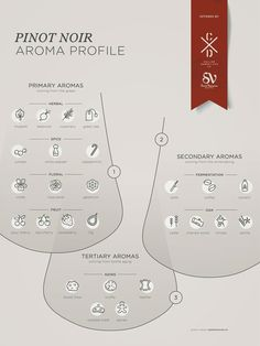 Pinot Noir grape variety wine aroma profile flavors fruit spices infographic Social Vignerons