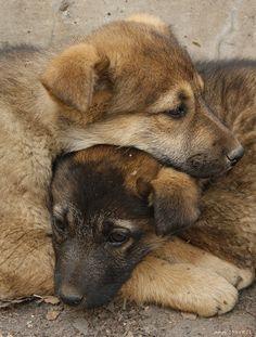 Русское фотосообщество №1 - Abandoned Dogs.