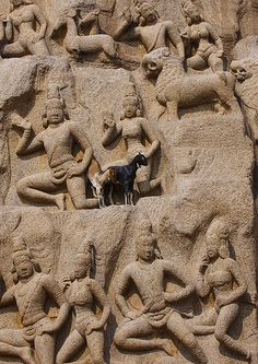 Real Goats Perched On Arjuna's Penance Carvings Mahabalipuram, India. Gives you a sense of size.