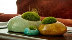 Moss Rocks! How random and cool.  Living sculptures and zen moss gardens all rolled into one neat package.