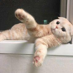Kittens Cutest, Cute Cats, Anime Neko, Animal Memes, Beautiful Creatures, Babe, Cute Animals, Kitty, Beautiful Things