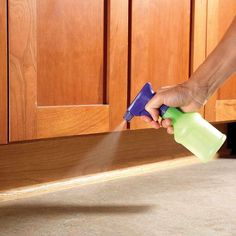 Erase Ant Trails - How to Get Rid of Ants: http://www.familyhandyman.com/pest-control/how-to-get-rid-of-ants#3