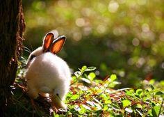 The Bunny Hop   Cutest Paw
