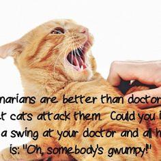 #comedy #comic #funny #joke #jokes #lol #standup #standupcomedy #cat #catlover #cats #catsofinstagram #cats_of_instagram #cutecat #cutecats #meow