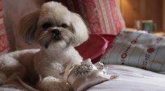 Ivory Ring Pillow attach to dog Collar ring bearer, Pet wedding accessory Ring Bearer Pillows, Ring Pillows, Dog Proposal, Purple Rings, Dog Wedding, Wedding Rings, Dog Store, Leather Collar, Handmade Wedding