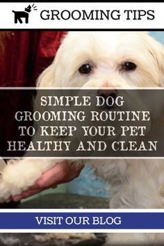 Dog Grooming Tips - How Often You Should Bathe a Dog >>> More info could be found at the image url. Dog Grooming Salons, Dog Grooming Tips, Dog Grooming Business, Pet Dogs, Pets, Dog Wash, Dog Teeth, Healthy Teeth, Your Pet