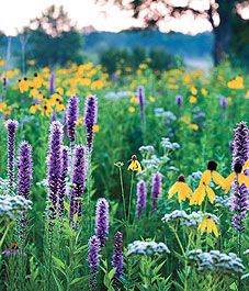 I'd love to have a field of wildflowers.  I'd romp in it often.