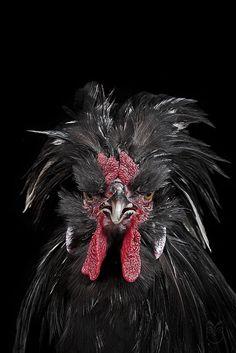 a4c08b5bd1a6345e1dfdfe80ec90f410--animal-books-bad-hair-day.jpg (534×800)