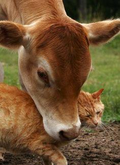 Amigos aninais #animaisbonitosdrf