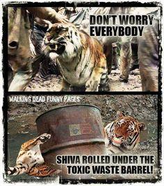 Don't worry everybody shiva it's ok   Walking Dead Funny Pages #TheWalkingDead #twd #walkingdead #AMC